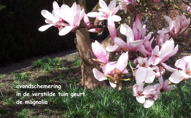 avondschemering / in de verstilde tuin geurt / de magnolia