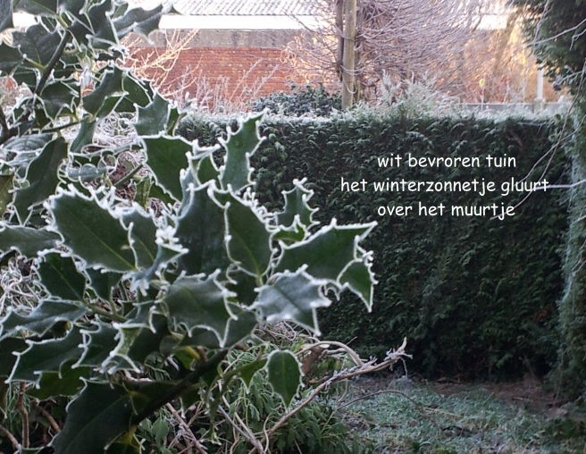 wit bevroren tuin / het winterzonnetje gluurt / over het muurtje