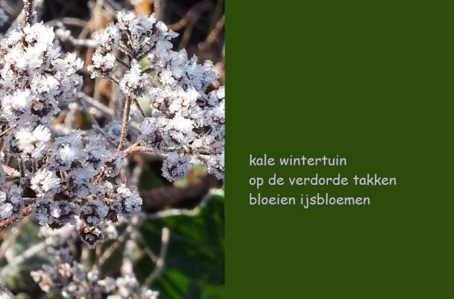 kale wintertuin / op de verdorde takken / bloeien ijsbloemen