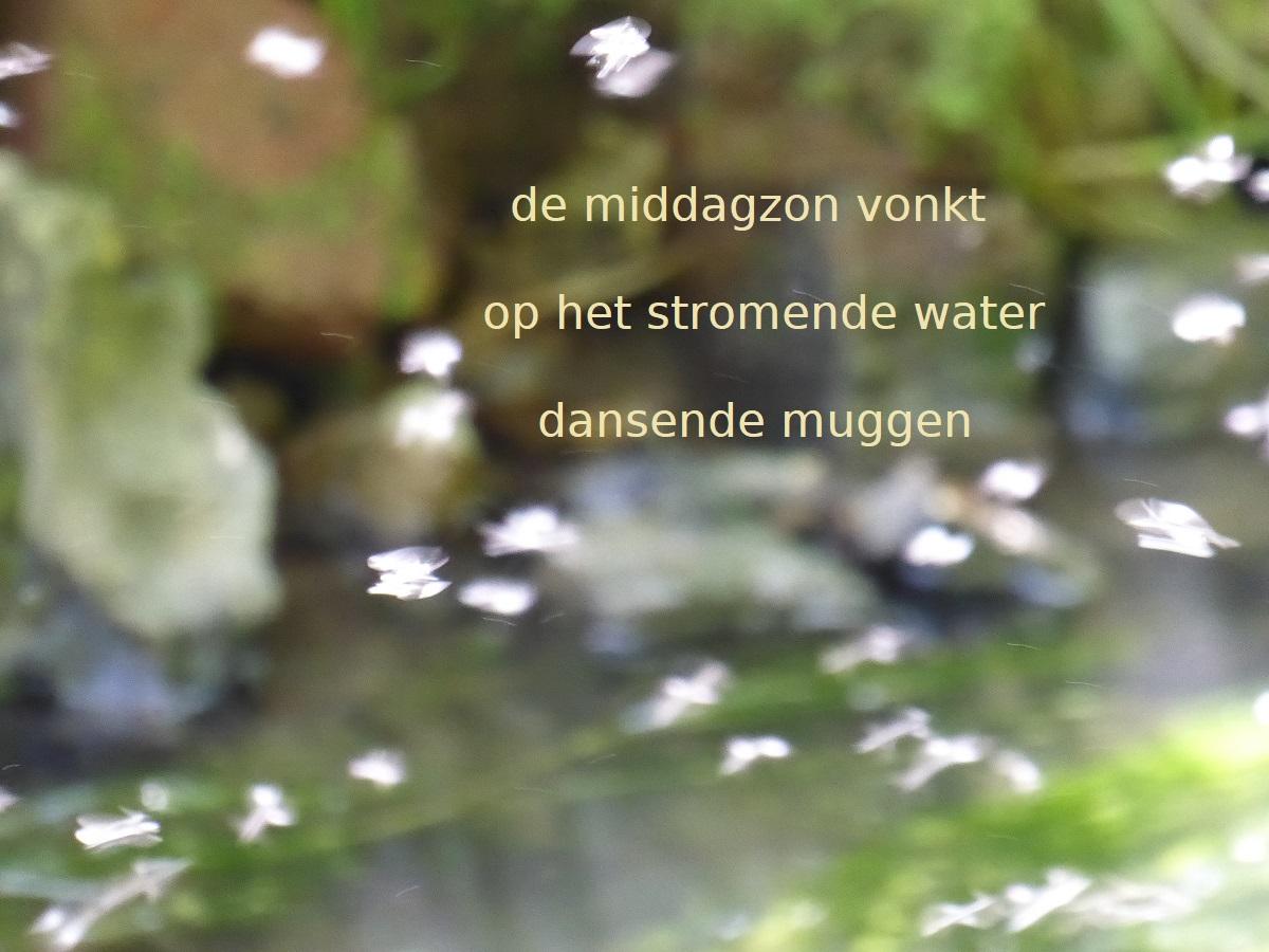 de middagzon vonkt / op het stromende water / dansende muggen