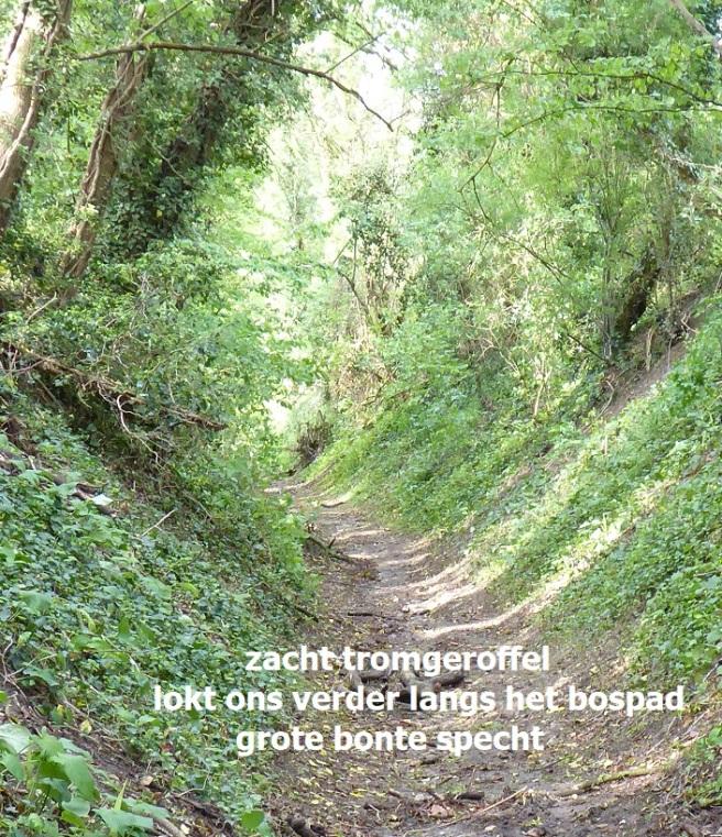 tromgeroffel / lokt ons verder langs het pad / grote bonte specht
