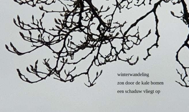 winterwandeling / zon door de kale bomen / een schaduw vliegt op
