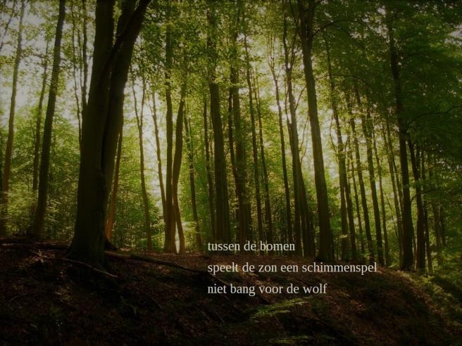 tussen de bomen / speelt de zon een schimmenspel / niet bang voor de wolf