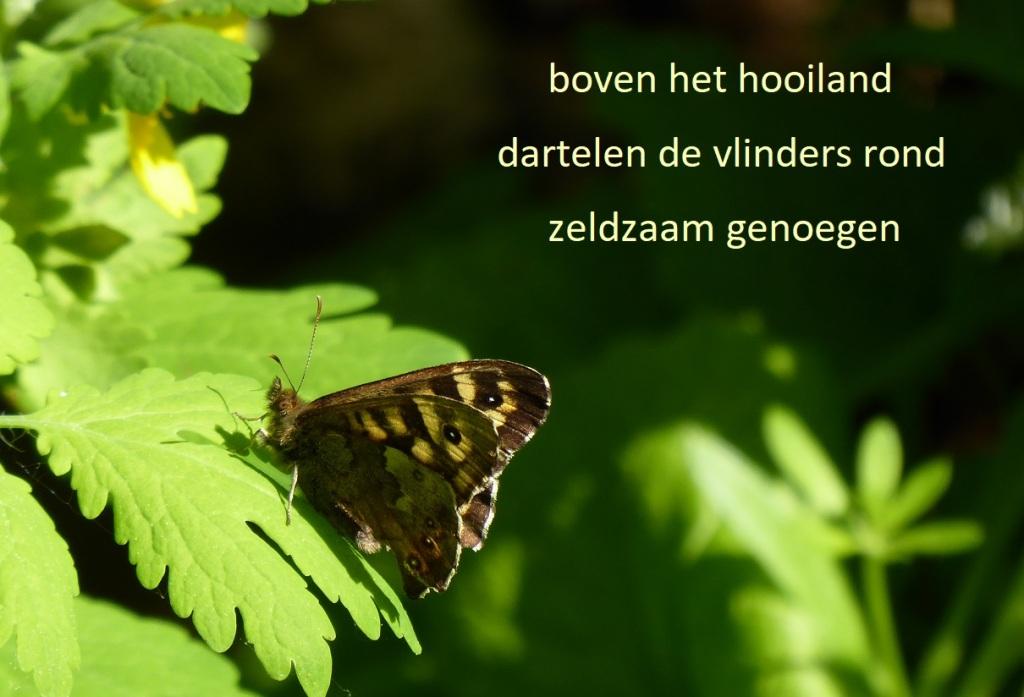 boven het hooiland dartelen de vlinders rond zeldzaam genoegen